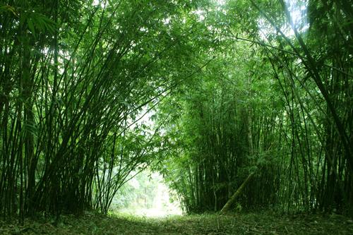 Material 1 - Vietnam bamboo material