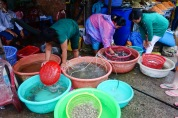 Fresh catch seafood of Ham Ninh Fishing Village