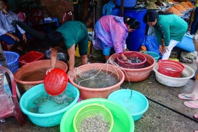Fresh catch seafood of Ham Ninh Fishing Village